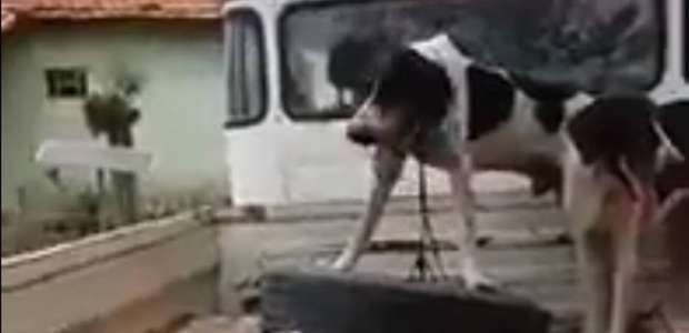 Polícia investiga abate de três onças-pintadas em Mato ...