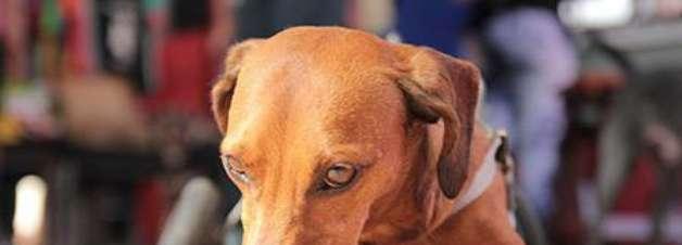 Campanha estimula adoção de animais com alguma deficiência