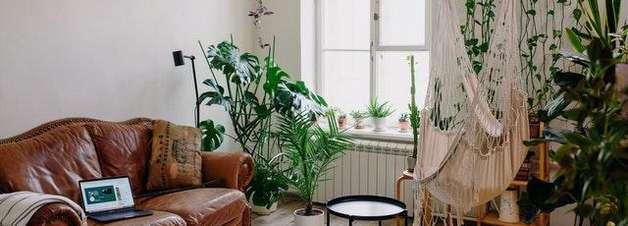 Veja quais são as plantas venenosas para crianças e pets