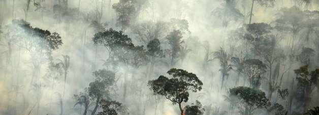Mais de 10.000 espécies correm risco de extinção na Amazônia