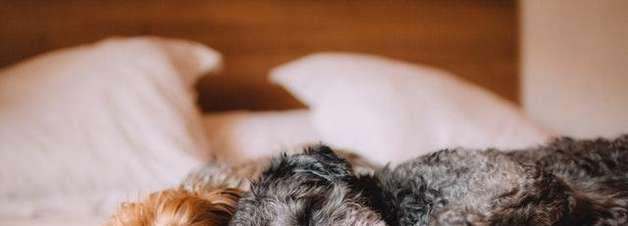 O cachorro com Lua em Leão