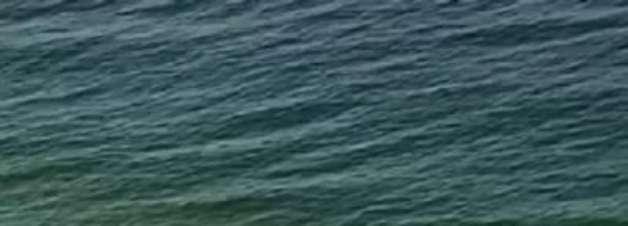 Tubarão quase ataca banhista e vídeo do 'susto' viraliza