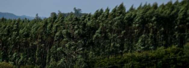 Stock Car: Foresti recupera vitória em Mogi Guaçu e punições na etapa de Goiânia são canceladas