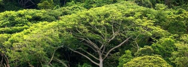 Madeira como reservatório de CO2
