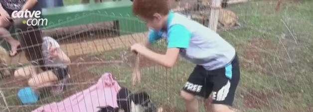 Dia das Crianças: evento de adoção de animais será realizado no Lago de Cascavel