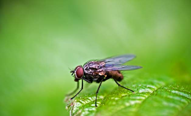 Criação de insetos para ração animal é oportunidade no País