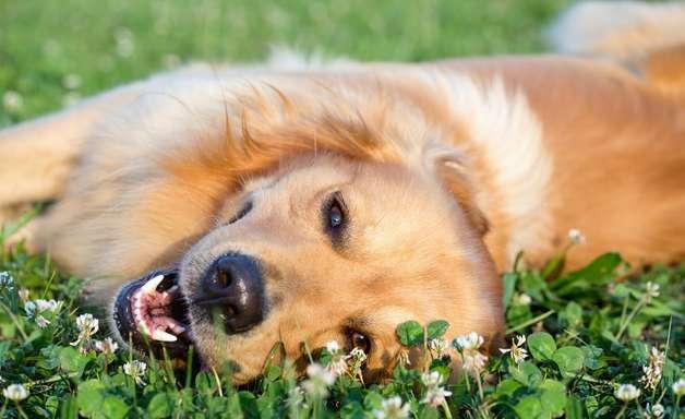 Saiba como prevenir os cães do calor intenso deste verão