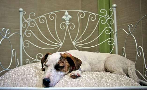 Você Sabia? Com o que sonham os animais?