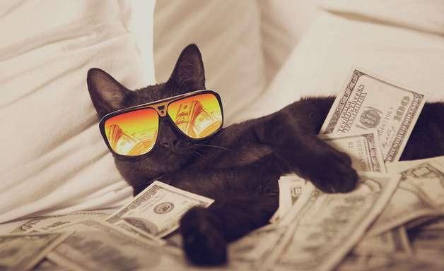 Gato preto ganha 18 promoções e acaba com mito do azar