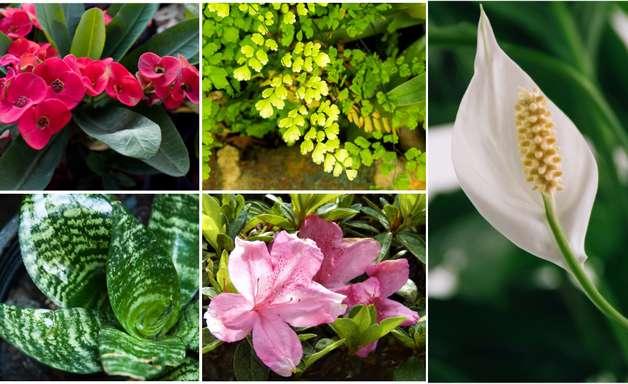 As plantas da sua casa que podem ser tóxicas para os animais de estimação