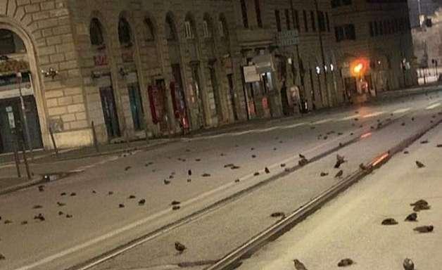 Fogos de artifício provocam 'massacre' de pássaros em Roma