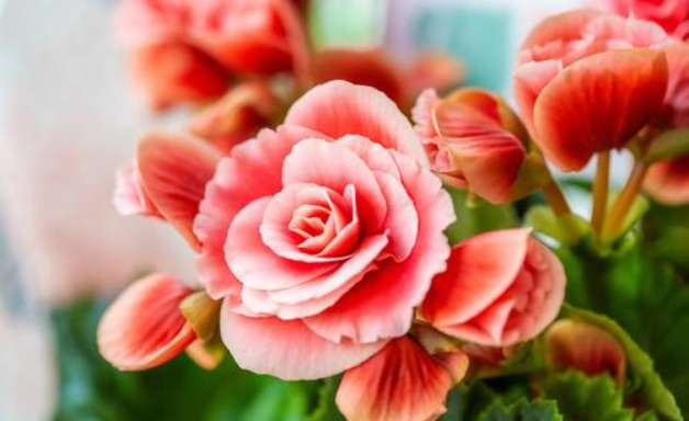 Tarot das Flores: O que virá para o seu signo de 5 a 11 de abril