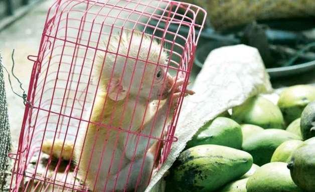 Tik Tok contra o tráfico de animais