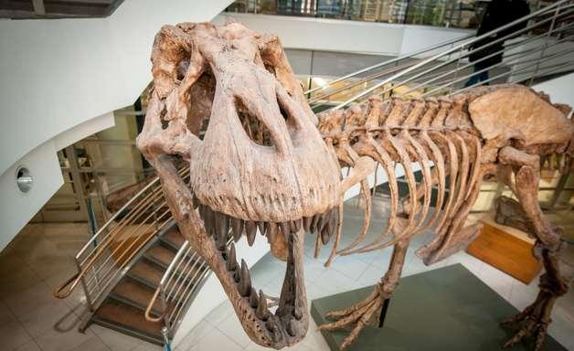 Quantos tiranossauros viveram na América do Norte? Cerca de 2,5 bilhões