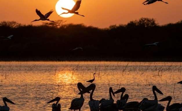 Exuberante parque Dinder do Sudão perde terreno pouco a pouco
