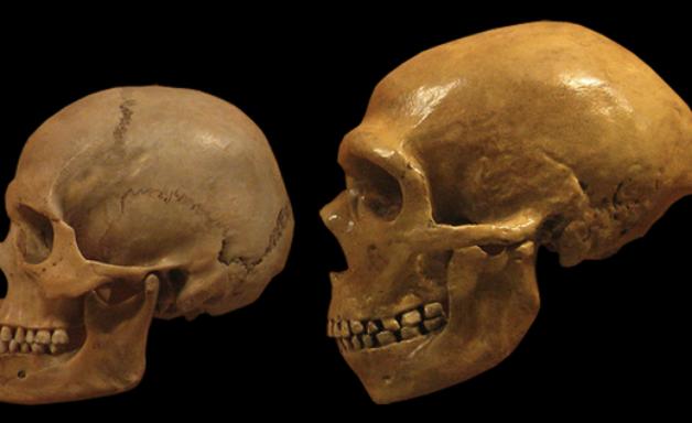Tipo sanguíneo traz revelações inéditas sobre neandertais e denisovanos