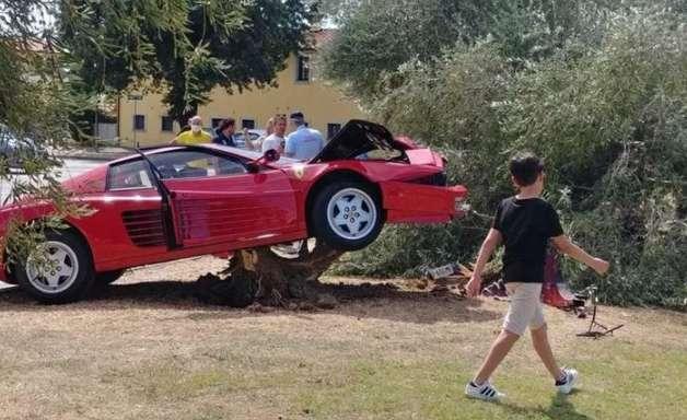 Motorista sobe em árvore e destrói Ferrari; veja