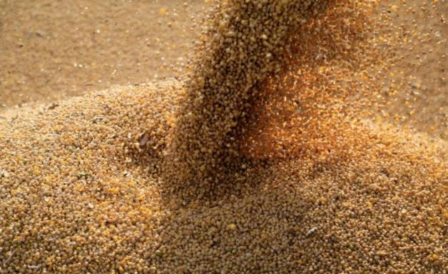 Exportação de soja e carne do Brasil mantém expectativa de alta em setembro