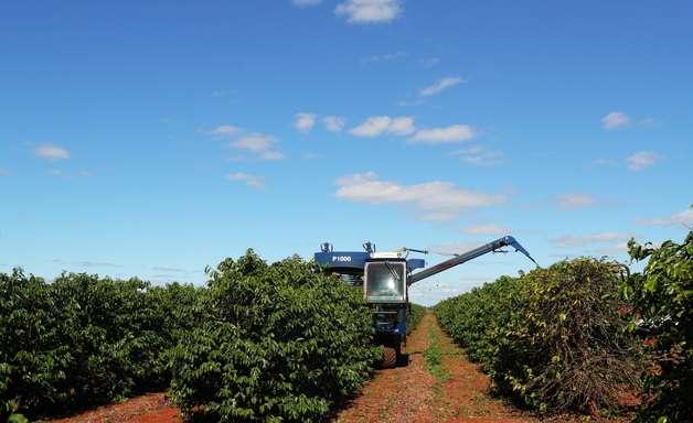 Governo ajusta estimativa do valor de produção agropecuária para R$ 1,103 trilhão em 2021