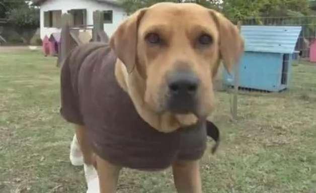 Vaquinha vai construir casas para 300 cães e gatos no RS