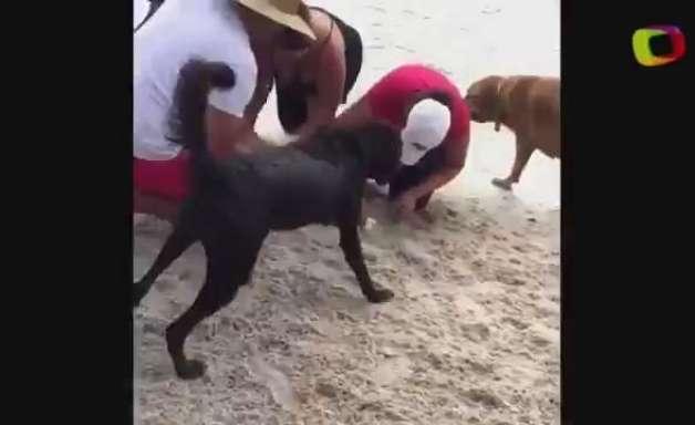 Homem salva cão com respiração boca a boca após afogamento