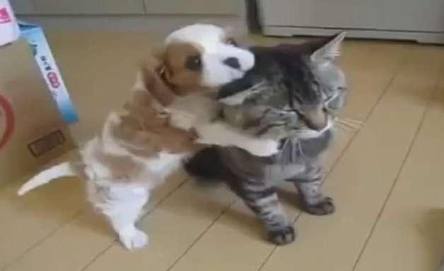 Exercício de paciência: cão pega gato para brincar