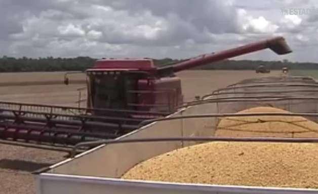 Top Agro: exportações do complexo soja subiram 27% em janeiro