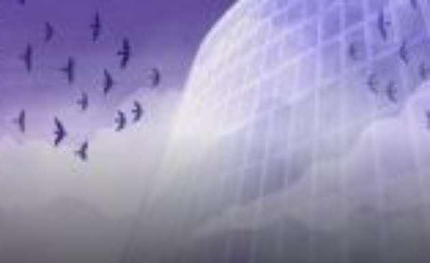 Como as aranhas ajudaram a salvar pássaros da morte em janelas