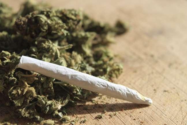 <p>Diversos estudos apontam benefícios do uso da erva para o tratamento de doenças e sintomas</p>