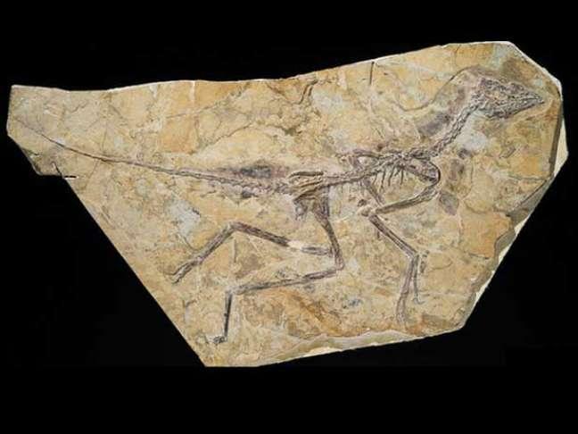 Fóssil descoberto na China pode ser da ave mais antiga já descoberta por cientistas