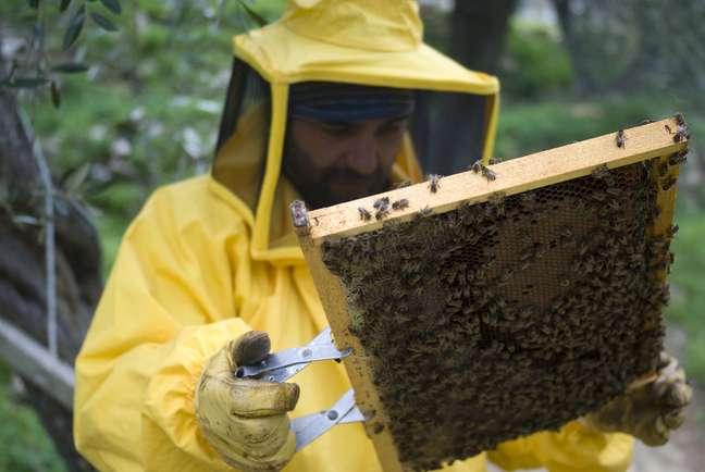 Realizar um curso de apicultura é o primeiro passo para incorporar a criação de abelhas à propriedade rural