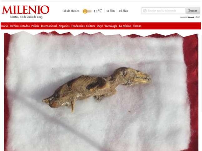 Exemplar do que pode ser um feto de velociraptor foi descoberto por trabalhadores em uma obra
