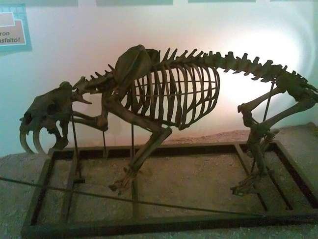 A Venezuela é um dos países com maior biodiversidade no planeta, e um lugar ideal para observar essa variedade de plantas e animais  do passado e do presente  é o Museu de Ciências Naturais de Caracas. A instituição conta com uma bela coleção de fósseis, na qual se destaca um esqueleto completo de tigre-dentes-de-sabre, espécie que viveu nessa parte da América do Sul há dez mil anos
