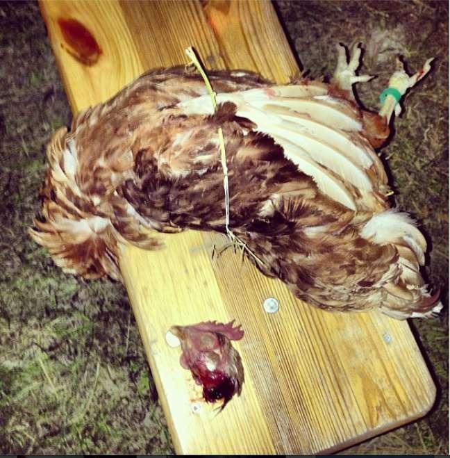 <p>O chef Alex Atala causou polêmica na última segunda-feira ao matar, depenar, picar e fritar uma galinha no palco do MAD, simpósio realizado em Copenhagen, na Dinamarca, que reúne chefs, cozinheiros e produtores que discutem assuntos do panorama da culinária atual</p>