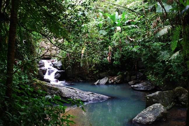 <p>O Parque Nacional El Yunque possui vegetação tropical</p>