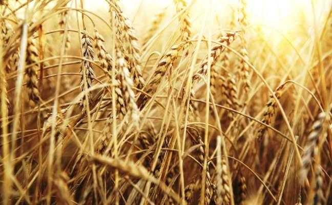 Trigo e derivados: 50% do que o brasileiro consome é produzido aqui, e tanto o trigo importado quanto o brasileiro sofrem influência do dólar. Mas o repasse não acontece imediatamente, pois os moinhos trabalham com estoque