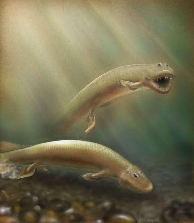 <i>Tiktaalik roseae</i> parecia um híbrido de crocodilo e peixe