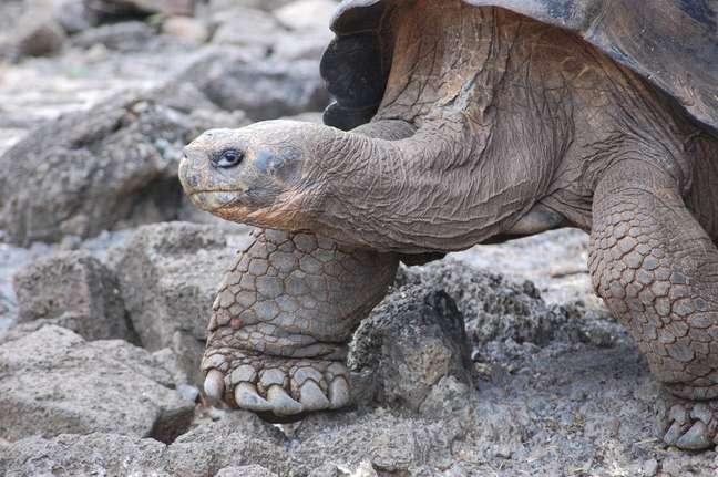 Segundo o professor da faculdade de veterinária da UFMG Leonardo Lara, as maiores tartarugas geralmente vivem mais