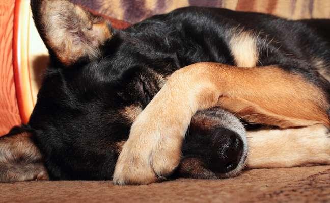 <p>Além da solidão, da exposição ao vento frio, da dor e da fome, há muitos cães que choram por pura manha</p>
