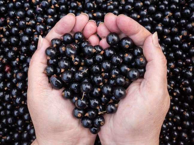 Também chamada de cassis, a groselha negra possui propriedades antioxidantes e anti-inflamatórias que fazem a diferença no espelho