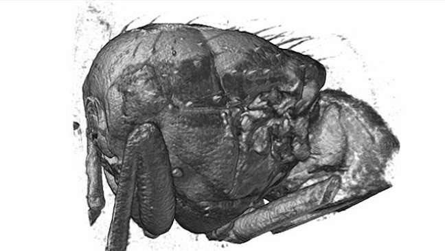 <p>Cientistas fizeram imagem 3D de mosca durante o voo</p>