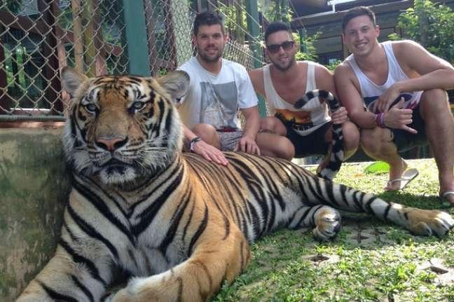 <p>Selfies ao lado de tigres podem ser proibidas em Nova York</p>