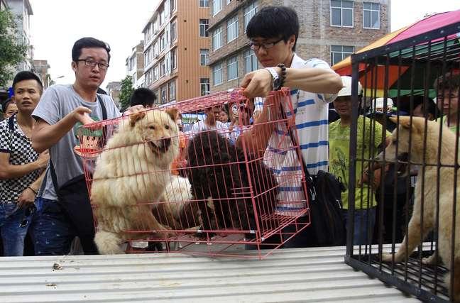 <p>Ativistas compramcães na tentativa de impedir que eles sejam adquiridos por pessoas que planejam abatê-los para o consumo durante o festival de Yulin, em 20 de junho</p>
