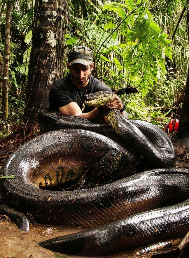 <p>Naturalista mede o dobro do tamanho de uma presa comum da sucuri</p>