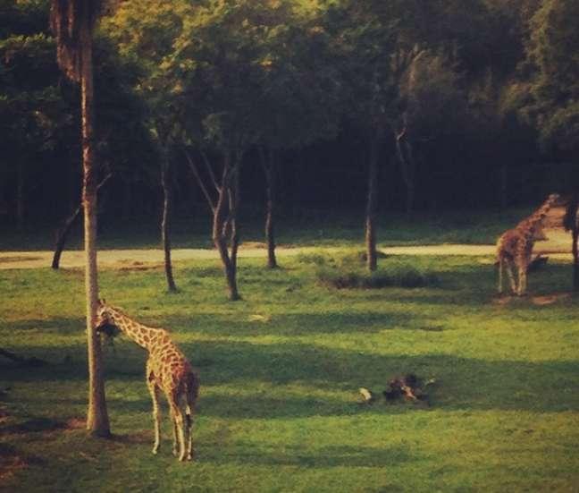 """A """"típica"""" cena matinal: acordar, café na mão e se deparar com duas simpáticas girafas"""