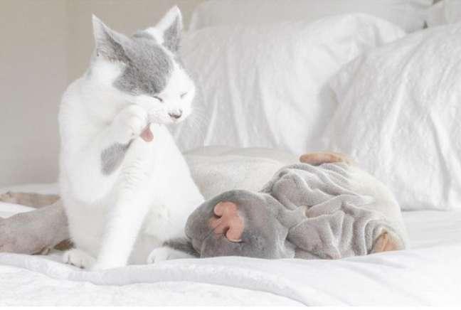 """""""Butler nunca deixa Paddington dormir"""""""
