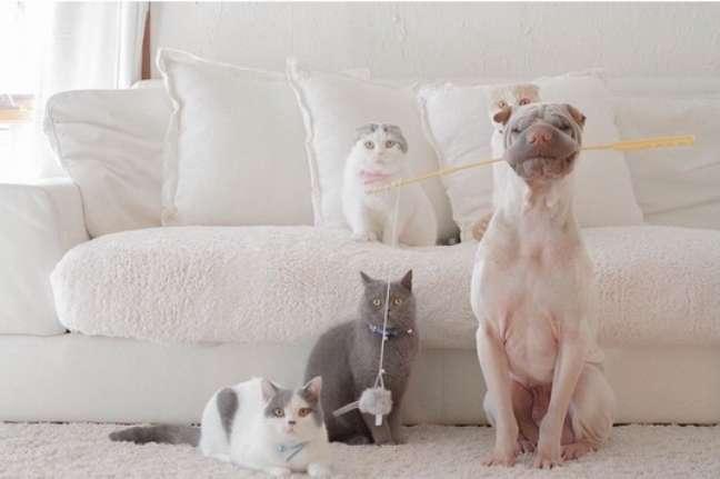 """""""Foto do momento em que Paddington foi pescar e pegou alguns gatinhos"""""""