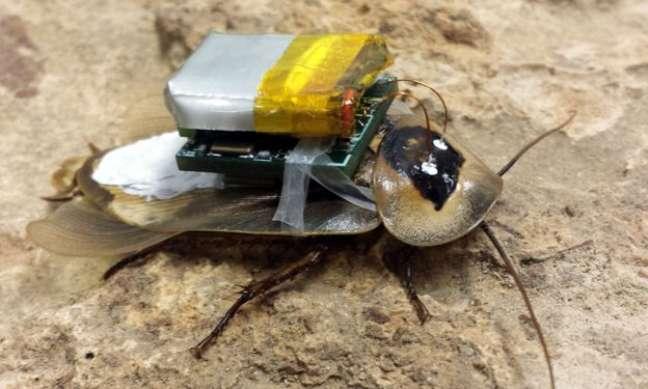 A barata robótica consegue obter informações de prédios desabados, por exemplo