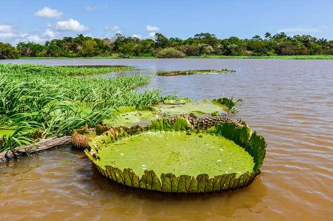 Hurtigruten fará roteiro com passagem pelo Amazonas