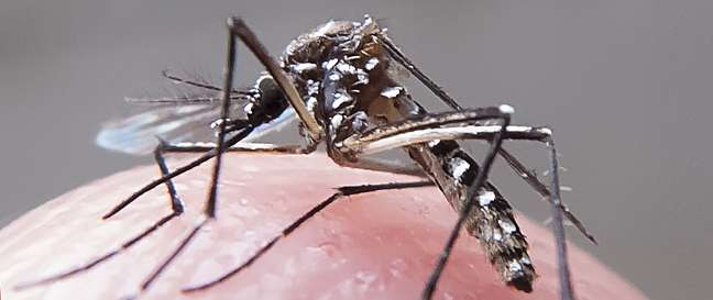 Aedes transmite zika, chikungunya, dengue e febre amarela.